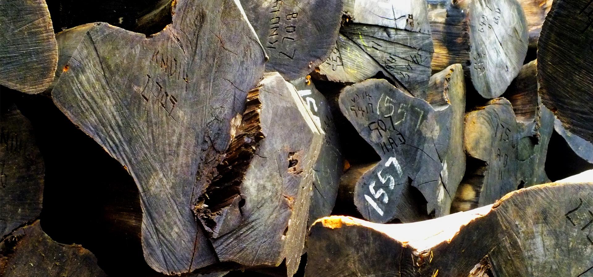 hardwood timber merchant, timber merchants in Kerala
